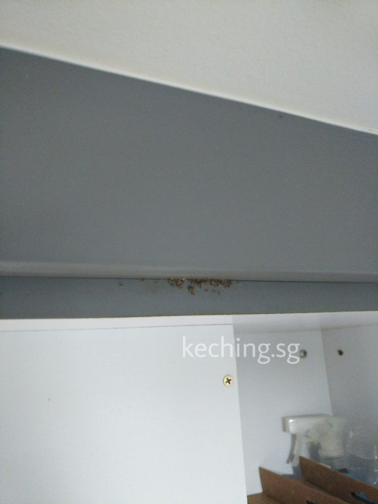 ant infestation in kitchen cabinets