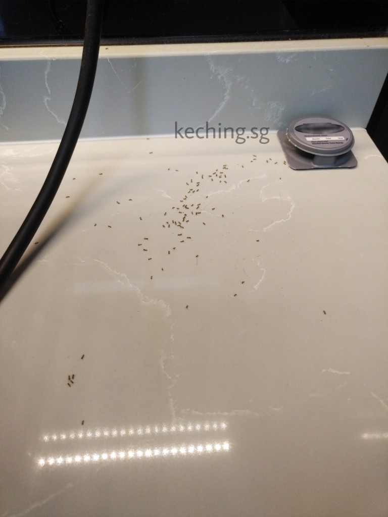 ant infestation in kitchen